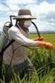 مدیر حفظ نباتات سازمان جهاد کشاورزی هرمزگان در خصوص استفاده از سموم غیر مجاز هشدار داد