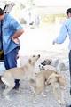 حمله وحشیانه به پناهگاه حیوانات در بندرعباس!