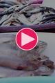 گزارش ویدیویی : دغدغه های دست فروشان ماهی بازار روز بندرعباس را ببینید
