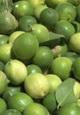 افزایش ده درصدی لیموترش از باغ های بخش جغین