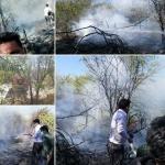 مهار آتش سوزی در اراضی جنگلی میناب