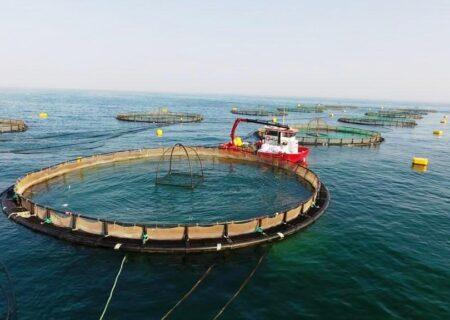 رونق پرورش ماهی در قفس در هرمزگان / پیش بینی برداشت بالغ بر شش هزار تن ماهی در قفس در هرمزگان