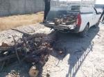 جلوگیری از قطع درخت و توقیف حدود ۳۰۰ کیلوگرم چوب غیرمجاز در شهرستان بندرعباس