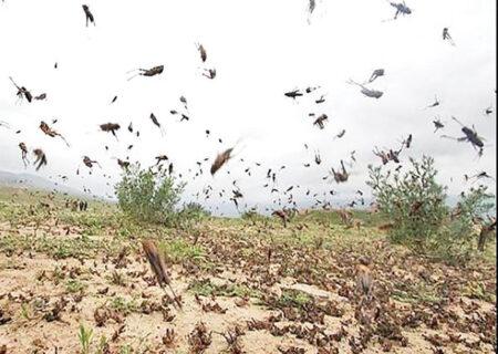 اکیپهای ردیابی و مبارزه با ملخهای صحرایی در هرمزگان سازماندهی شدهاند